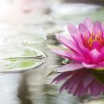 lotus-150x150